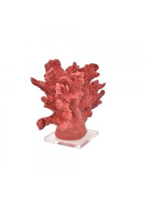 Coral Largo Vermelho