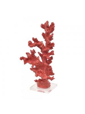 Coral Alto Vermelho